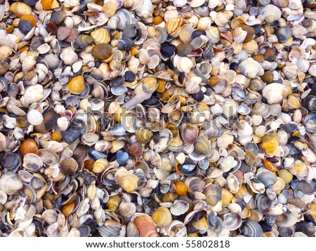 Shell, Sea, Backgrounds