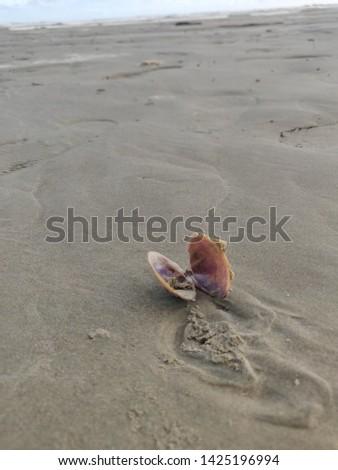 Shell the shell Sea shell the sea shell