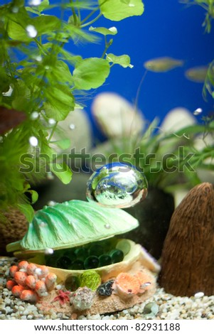 Shell with bubbles decoration og aquarium