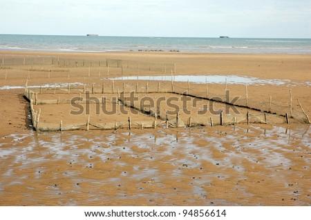 shellfish aquaculture sites