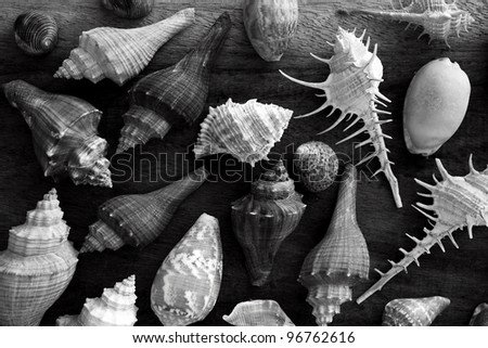 shellfish on a wooden background in black and white