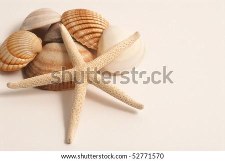 stock-photo-shells-and-starfish-52771570.jpg