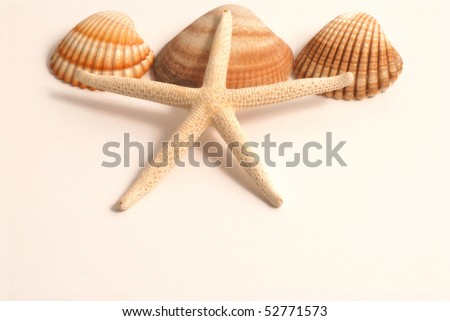 stock-photo-shells-and-starfish-52771573.jpg