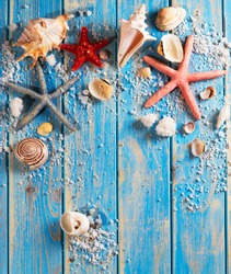 Shells and starfish on a eco board background
