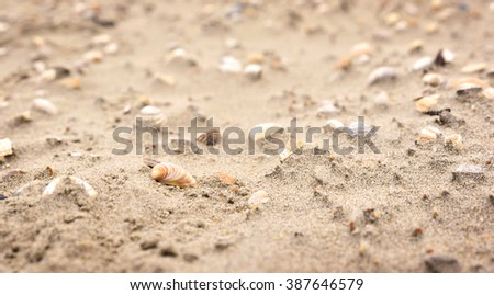 Shells at the beach, selective focus on the foreground with copy space. Sand and sea shells.  #387646579