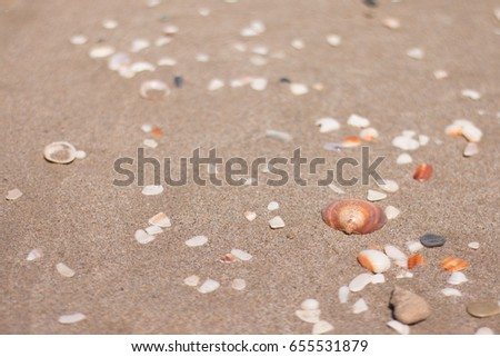 Shells in the beach #655531879