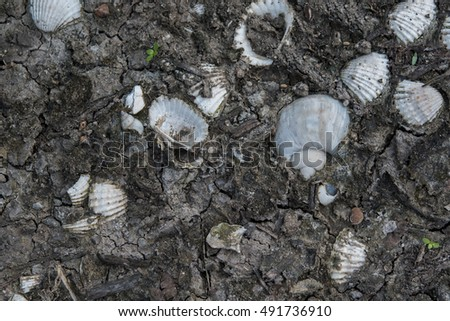 Shells in the soil #491736910