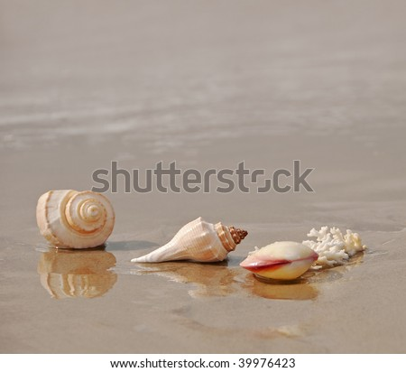 shells mirrored in the surf of the beach