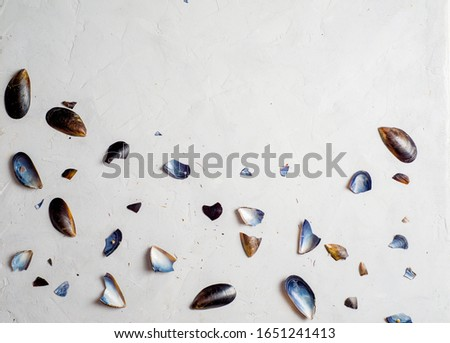 shells, mussel shells and splinters on a light texture background. Place for text