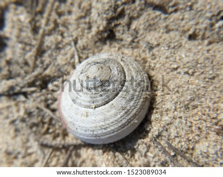 Shells of dead shells, on a sandy background