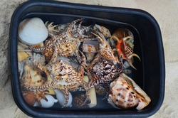 Shells of many types and sizes are found on our shelling beaches. Close-up view of seashells in the box. Top view, marine concept.