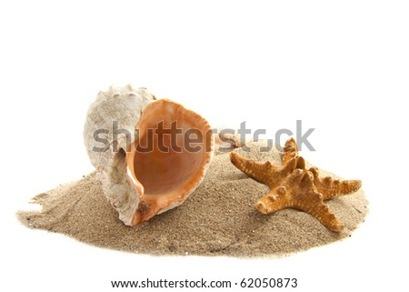 Shells on a pile of sand isolated over white