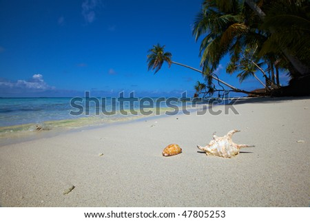 Shells on a tropical beach!