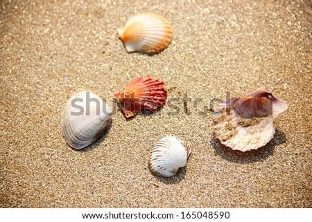 Shells on beach.