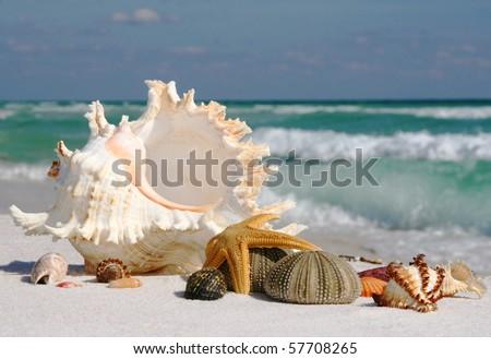 Shells on Gulf Coast Beach