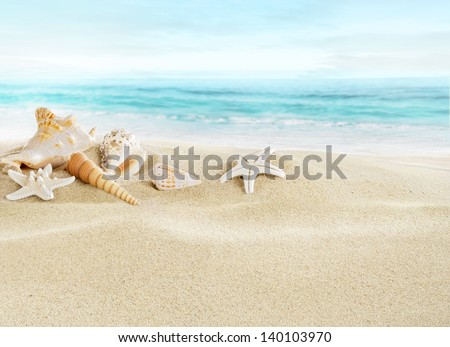 Stock Photo Shells on sandy beach