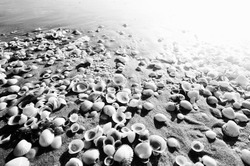 Shells on sandy beach near sea in summer .taken during sunrise black and white photography