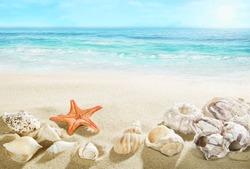 Shells on the beach.