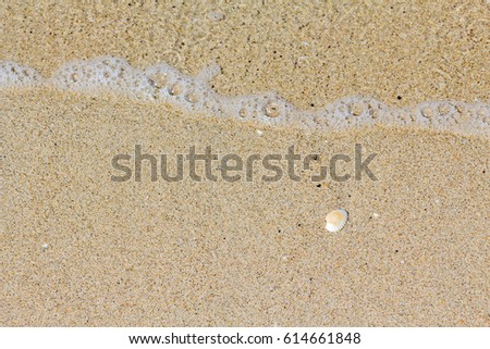Shells on the beach #614661848