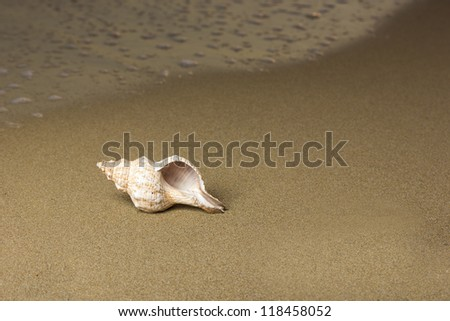 Shells on the beach at sunrise