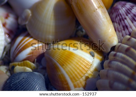 Shells on the beach (exclusive at shutterstock)