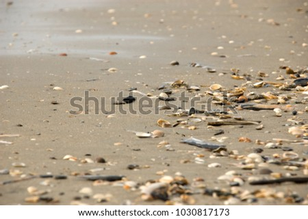 Shells on the beach of the North Sea in Ijmuiden, the Netherlands #1030817173