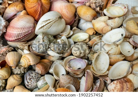 Shells on the City Market in Africa, Fish Market in Dar Es Salaam, Tanzania Foto stock ©