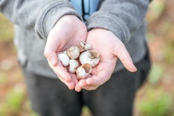 Shells on the forest.Empty snail shells in woman's hand. Collecting empty shells, taking shells from the forest. Environmental issues, climate crisis concept.
