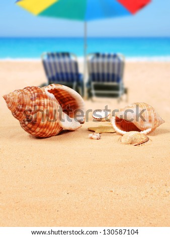 Shells on the sandy beach and beach chairs with parasol in the background