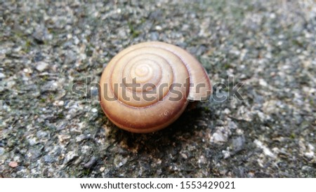 Shells on the stone ground, the snail shells, the snail shells