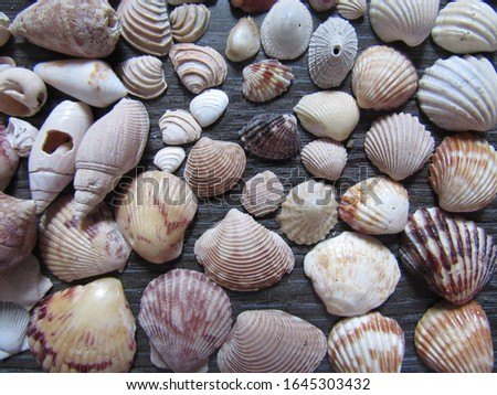 shells, snails and more shells. Beauties of the sea