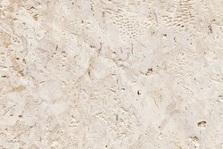 Shelly limestone is a highly fossiliferous limestone, composed of a number of fossilized organisms. Background texture