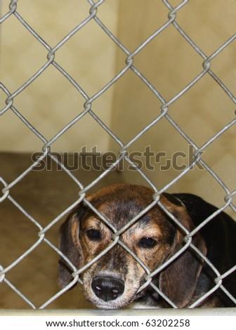 Shelter Dog - stock photo