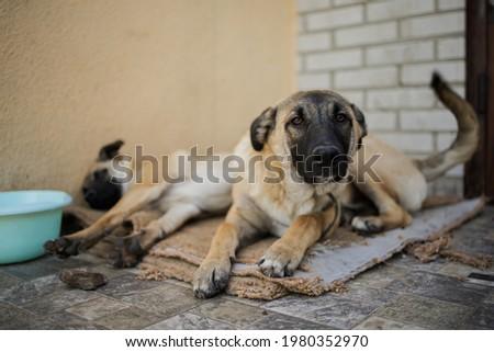 Shelter Dog Sad Adopt. Homeless Dog At The Shelter Foto stock ©