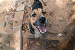 Shelter Dogs Outside, happy and sad