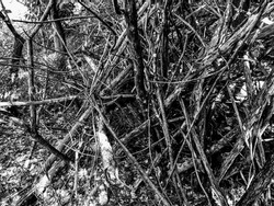 shelter of criss cross branches in forest