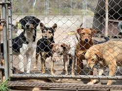 Shelter of dogs collected from different breeds abandoned. Some people abandon their pets, which roam the streets until they are taken to a kennel.