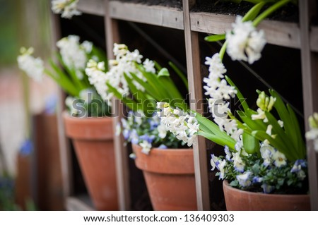Shelves with pots of flowers