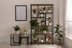 Shelving unit with collection of beautiful houseplants indoors