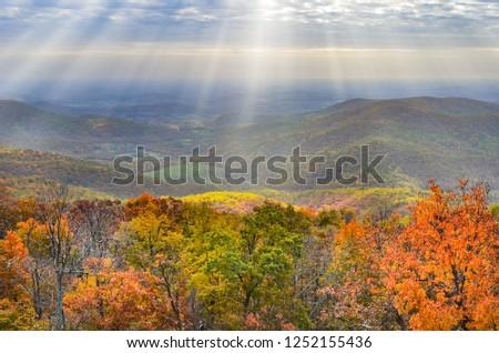 Shenandoah National Park in Autumn foliage - Virginia, United States of America