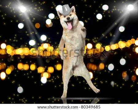 Shiba-inu dog in disco hat dance on her hind legs