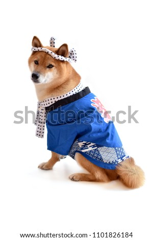 "shiba inu happi coat Translation: ""shiba""  #1101826184"