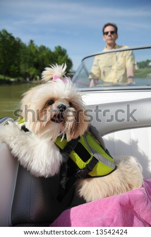 Shih Tzu Puppy In A Life Vest while riding in a boat on a small lake.