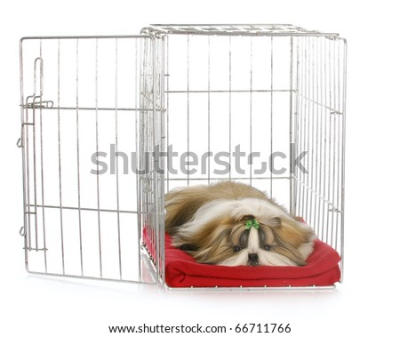 shih tzu puppy laying in open dog crate with reflection on white background