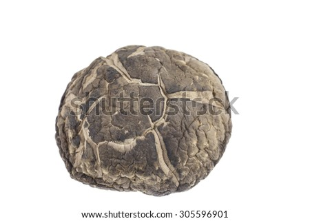 Shiitake mushroom on white background. #305596901