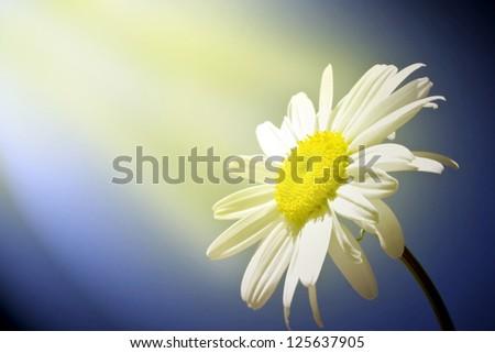 Shine flower - stock photo