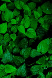 shiney green leaves with nature art