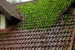 shingle roof with green moss on surface landmark background texture view in moody rainy autumn season day time