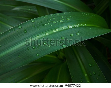 Shining dew-drops. Green grass.