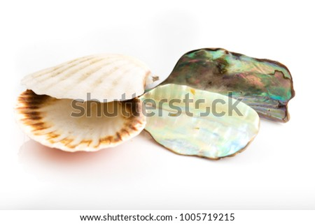 Shining mother of pearl and sea shell.